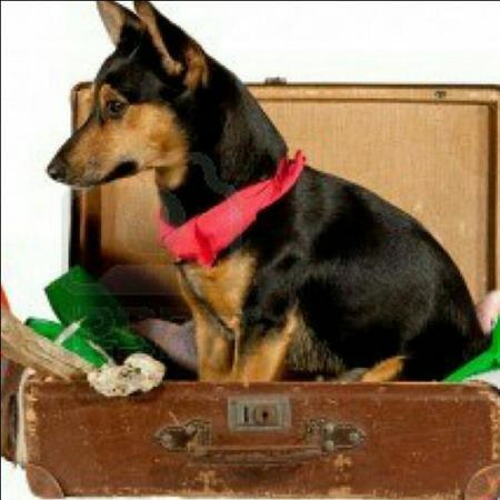 Viajar en agosto con perro