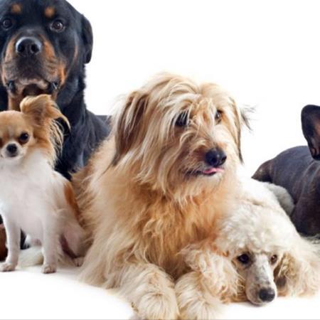 Pasion por los perros