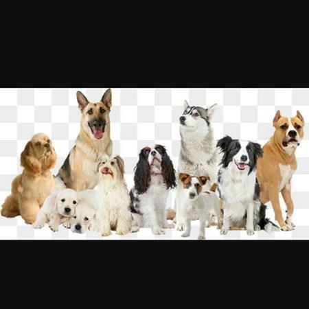 Grupo de gente con perros