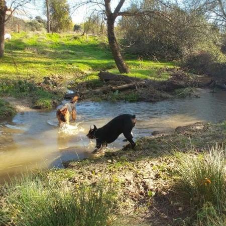 Rutas Caninas Madrid