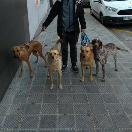 Paseos con perros por Manresa